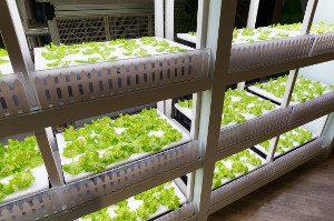 Modell einer Vertical-Farming-Anlage auf mehreren Etage
